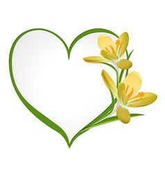 Yellow crocus with a frame in the shape of heart vector image vector image