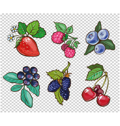 big collection of hand drawn berries vector image