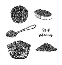 hand drawn set red caviar vector image