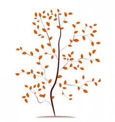 young tree in autumn vector image