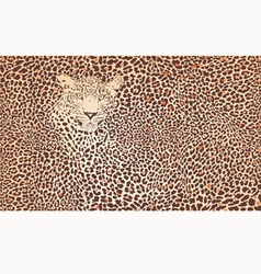 Pattern background leopard vector image