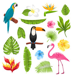 set tropical flowers exotic birds and plants vector image vector image
