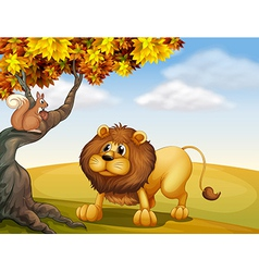 A lion looking at the squirrel vector image vector image