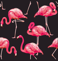 tropical bird flamingo background vector image