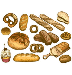 color hand drawn bread french loaf fresh bakery vector image