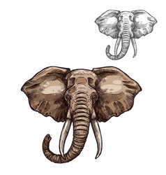 Elephant isolated sketch african mammal animal vector
