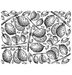 Hand drawn background of ripe charichuelo fruits vector