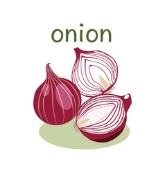 Red Onion Isolated object in flat style vector