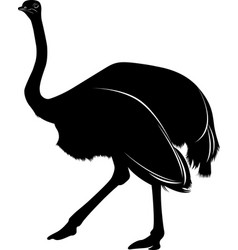 silhouette a bird ostrich isolated on white bac vector image