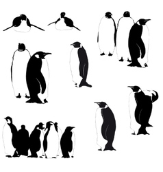 Penguin silhouettes on the white vector