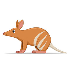 bandicoot animal standing on a white background vector image