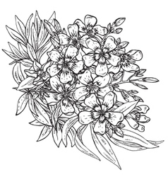 Hand drawn flower Rhododendron bouquet vector