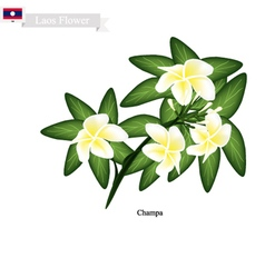 National Flower of Lao Champa or Plumeria vector