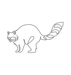 one continuous line drawing cute racoon vector image