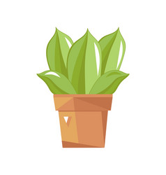 Succulent cactus in pot isolated icon vector