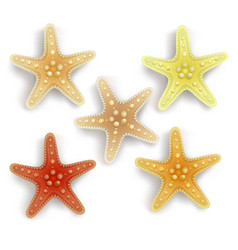 Colorful starfish set in white background vector