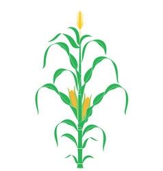 Corn stalk plant vector