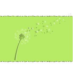 flying dandelion seeds vector image