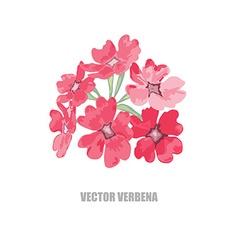 Hand drawn verbena vector