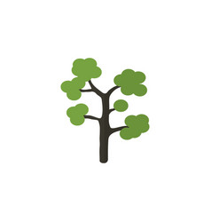 Isolated evergreen flat icon garden vector