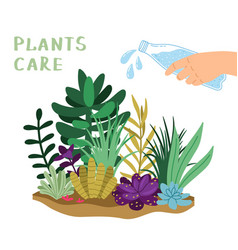 plants care vector image