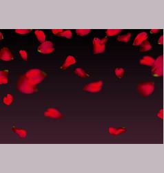 Red sakura or rose falling petals vector