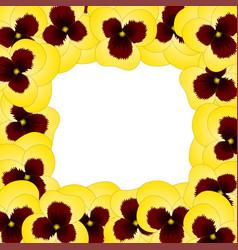 yellow viola garden pansy flower border vector image