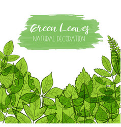 Green leaves decoration vector