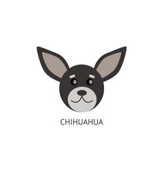 Grey chihuahua head drawing isolated on white vector