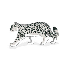 snow leopard isolated flat style white vector image