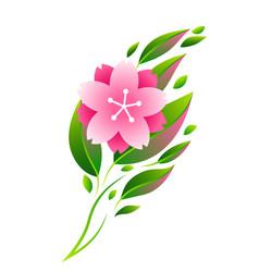 twig sakura or cherry blossom vector image