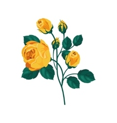 Yellow Rose Hand Drawn Realistic vector image vector image