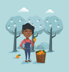 Young african-american farmer collecting oranges vector