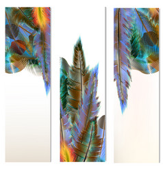 Brochures set with colorful feathers vector
