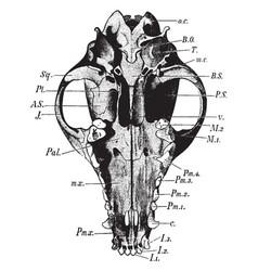 Dog skull vintage vector