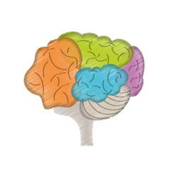 Drawing colo brain idea innovation vector