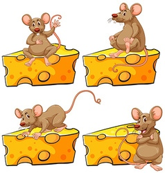 Four poses of mouse and cheese vector