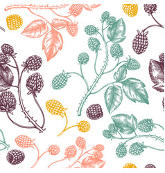 hand drawn blackberries backdrop in color wild vector image