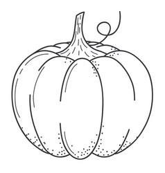 pumkin scketch doodle style line art vector image