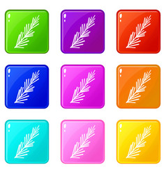 Rosemary spice icons 9 set vector