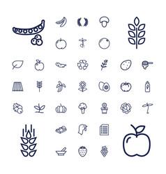 37 organic icons vector