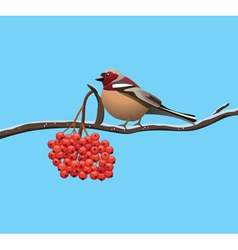 Bird on a branch vector
