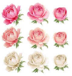 high quality watercolor peonies collection gothic vector image