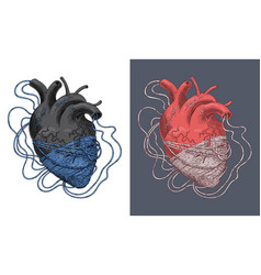 stylized heart tangled in threads vector image