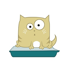 Cat in toilet vector image