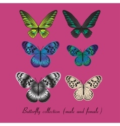 Collection with colorful butterfly vector image vector image