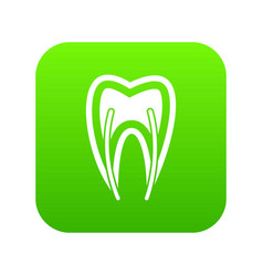 Tooth cross section icon digital green vector