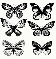 collection of realistic butterflies in vintage vector image