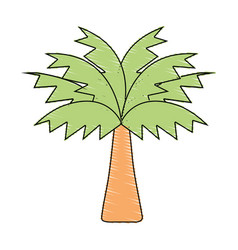 Palm tree with leaves and vegetation vector