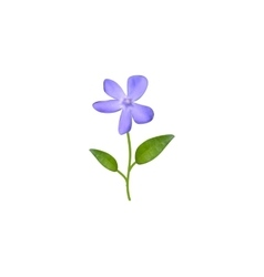Beautiful watercolor blue flower with leaves vector image